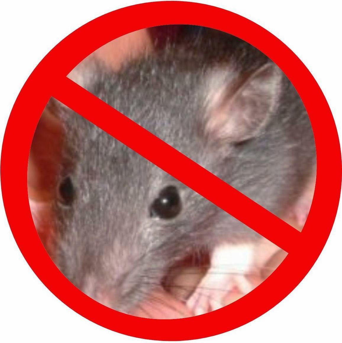 Eliminar ratas ratones Barcelona