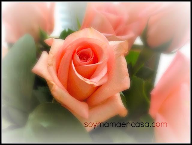 trucos de magia con rosas: