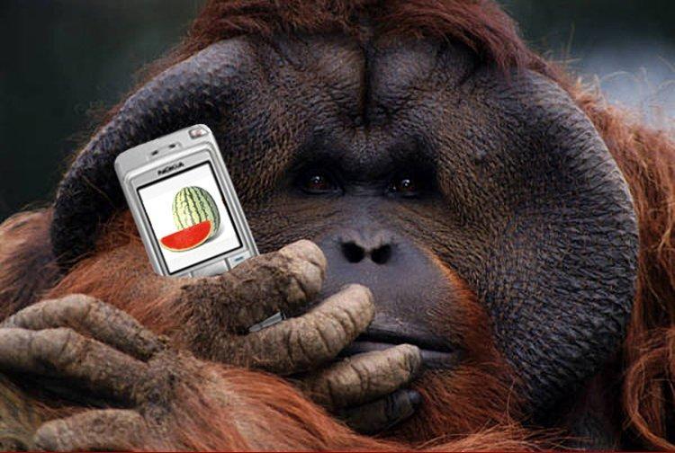 Cartoon Funny Funki: Funny Animals Using Mobiles