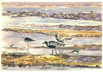 Waders in the marshes at low tide, Gabès, Tunisia: watercolors. by Imed Essetti