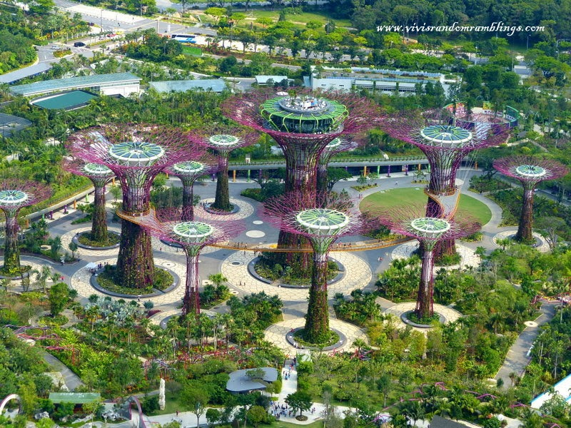supertrees gardens by the bay, from the Sands SkyPark Observation Deck, Marina Bay Sands