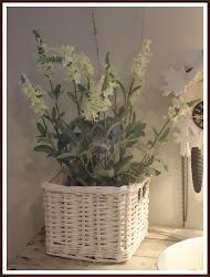 -Valkoinen laventeli-