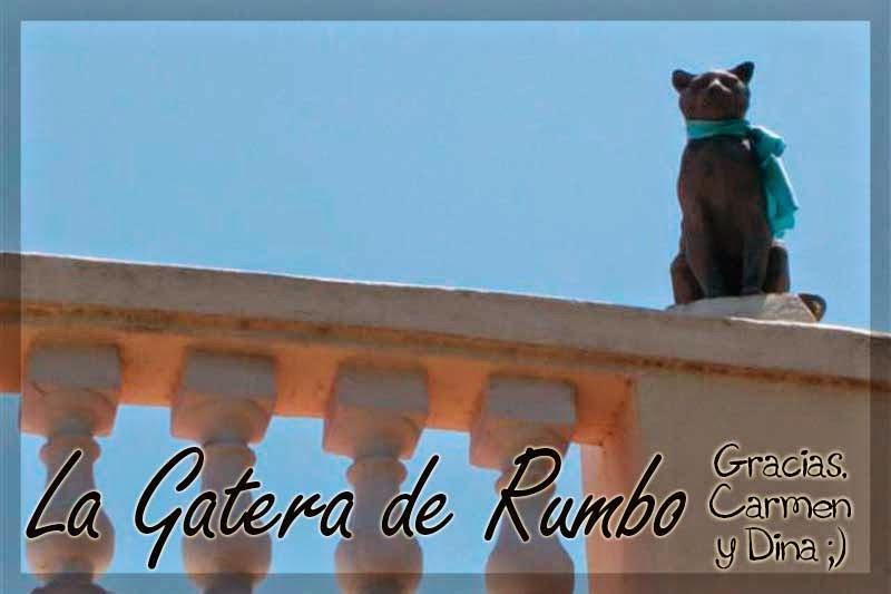 Un gato en azotea de La Habana