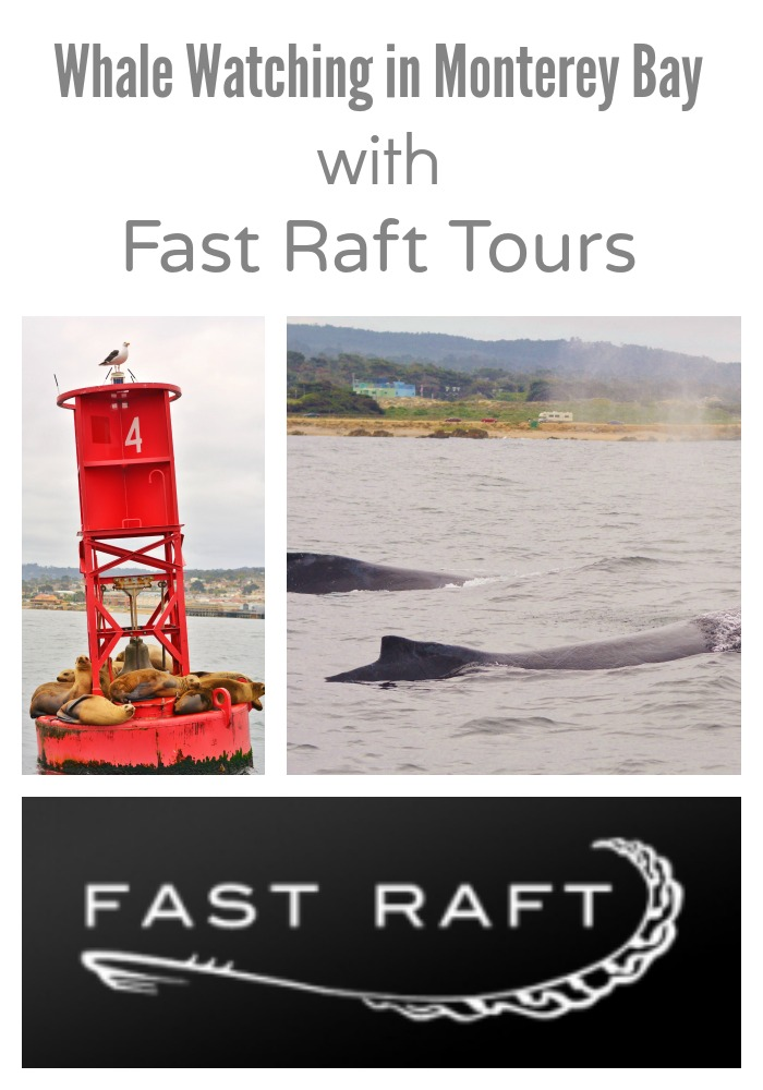 An amazing wildlife watching experience. Fast Raft tours gets you up close and personal with sea life, including #whales! #travel #familytravel