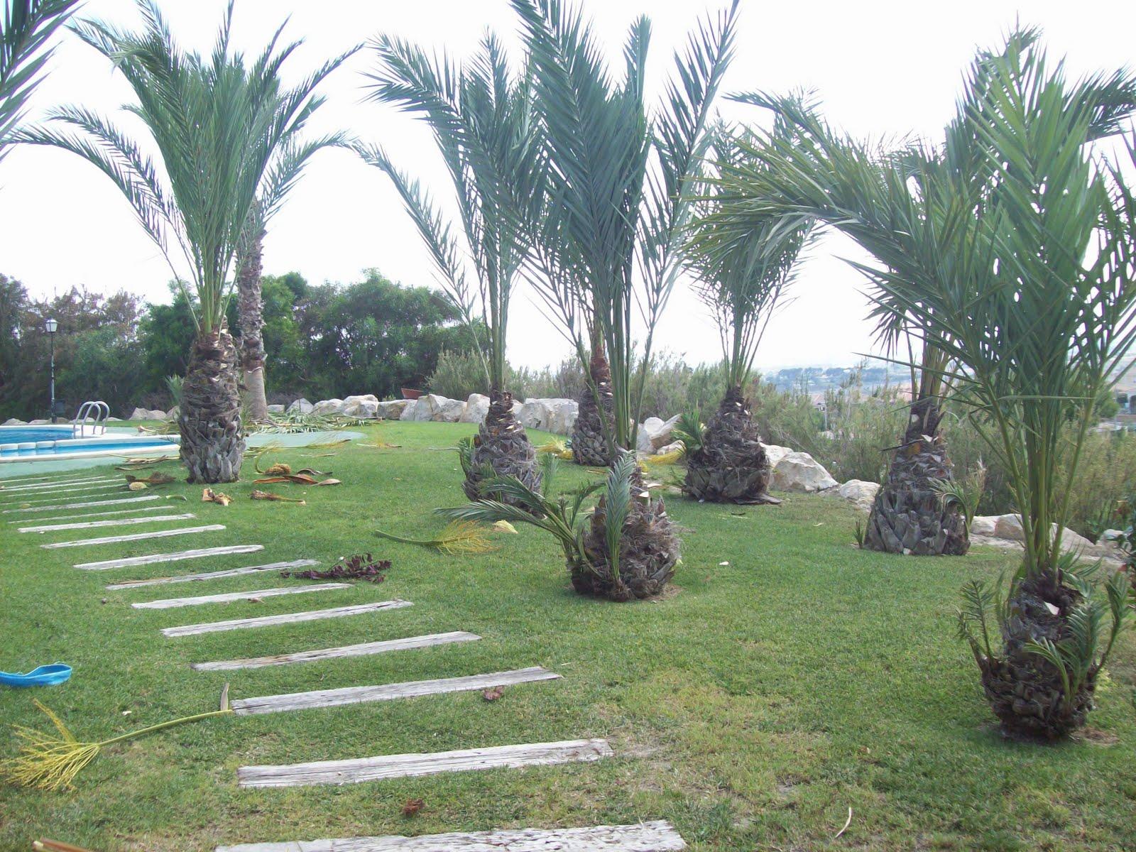 Las lomas de bonalba poda de las palmeras jardines las - Palmeras para jardines ...