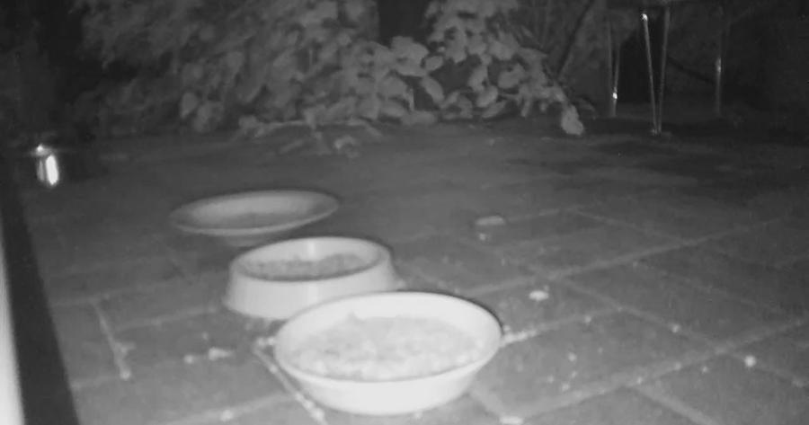 mensch tier natur wissen hilft sch tzen ein n chtlicher dieb auf der terrasse. Black Bedroom Furniture Sets. Home Design Ideas