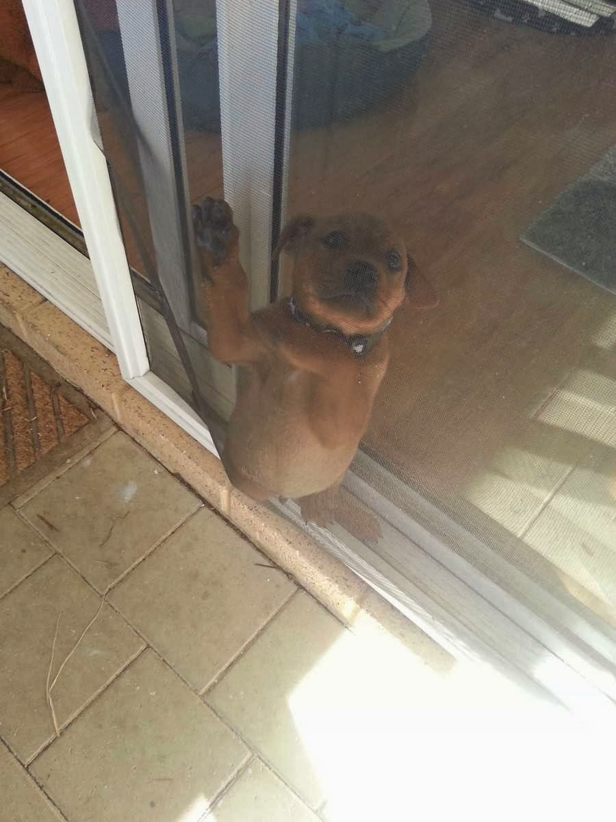 Cute dogs (50 pics), dog pictures, puppy stuck between doors