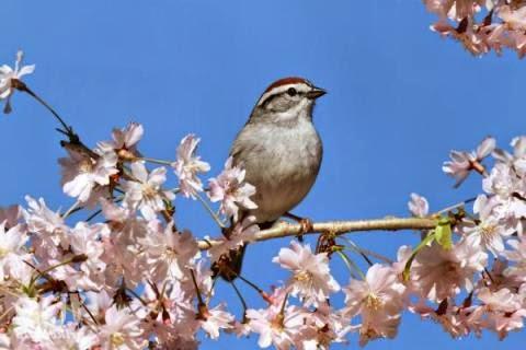 лучшие стихи про весну