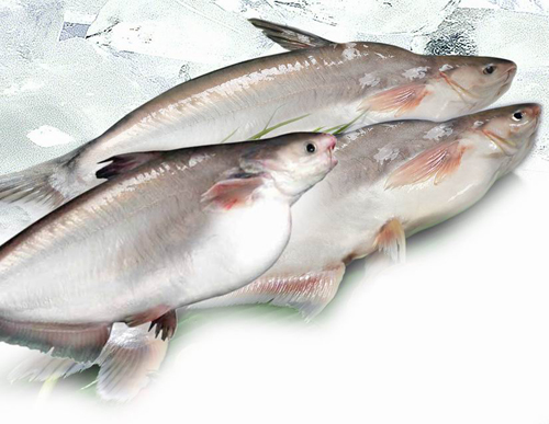 Lebanese aquaculture fish mislabeling and information for What kind of fish is basa