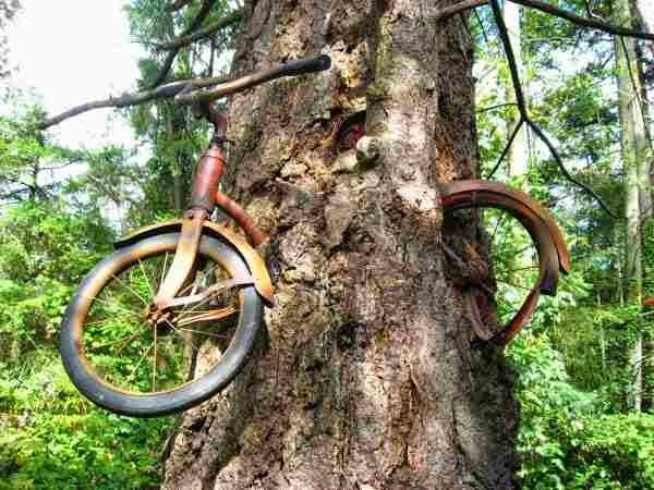 شخص ترك دراجته, دراجة تنتظر صاحبها منذ قرن , ذهب ولم يعد, دراجة أكلتها شجرة