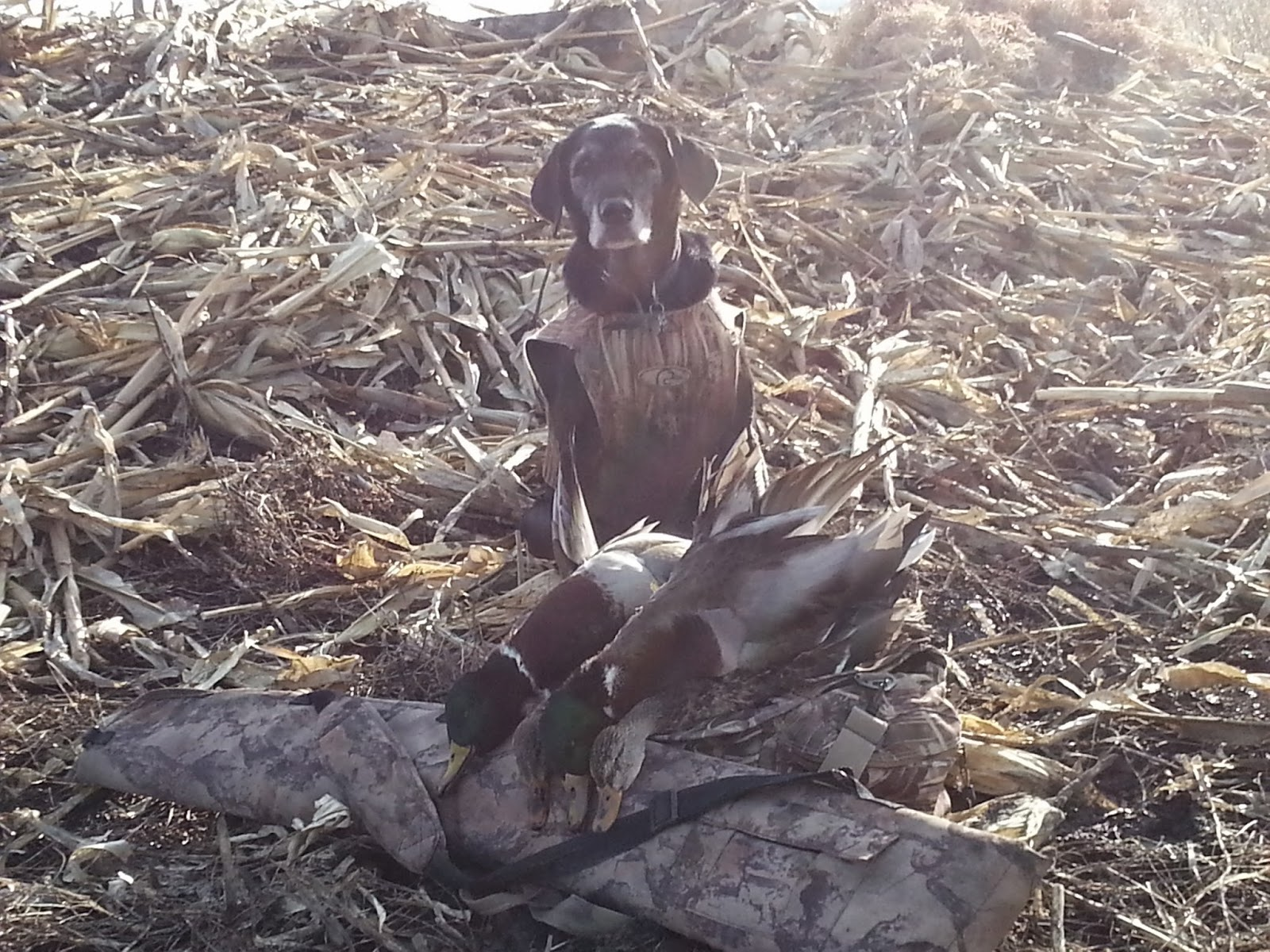 Benefits of duck hunting with a well-trained dog