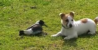 Pájaro y Perro juegan juntos