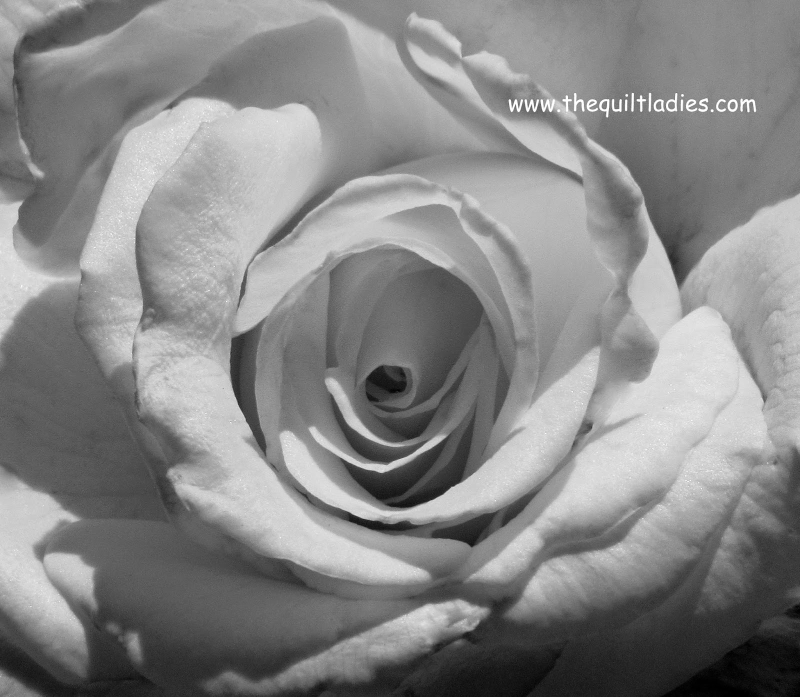 Black and White Rose, Beth Ann Strub (C)