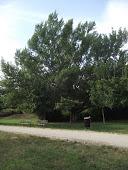 Ad oggi  <b>668</b> alberi piantati