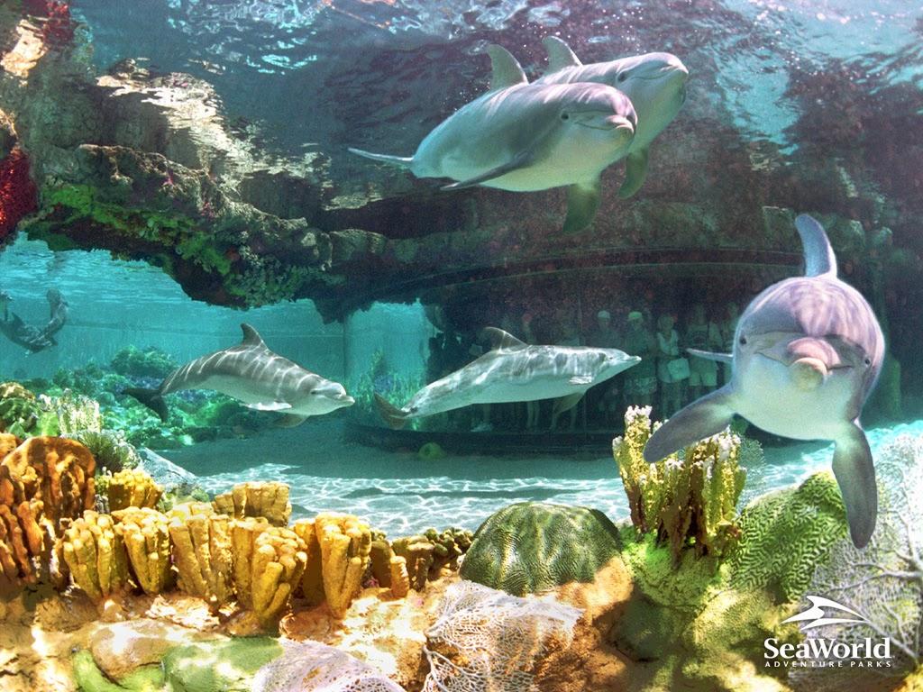 "<img src=""http://4.bp.blogspot.com/-G2T8lM84iEQ/UtqVuMbGNoI/AAAAAAAAIx0/E4uQ-CNKcko/s1600/dolphins-at-sea-world.jpeg"" alt=""dolphins at sea world"" />"