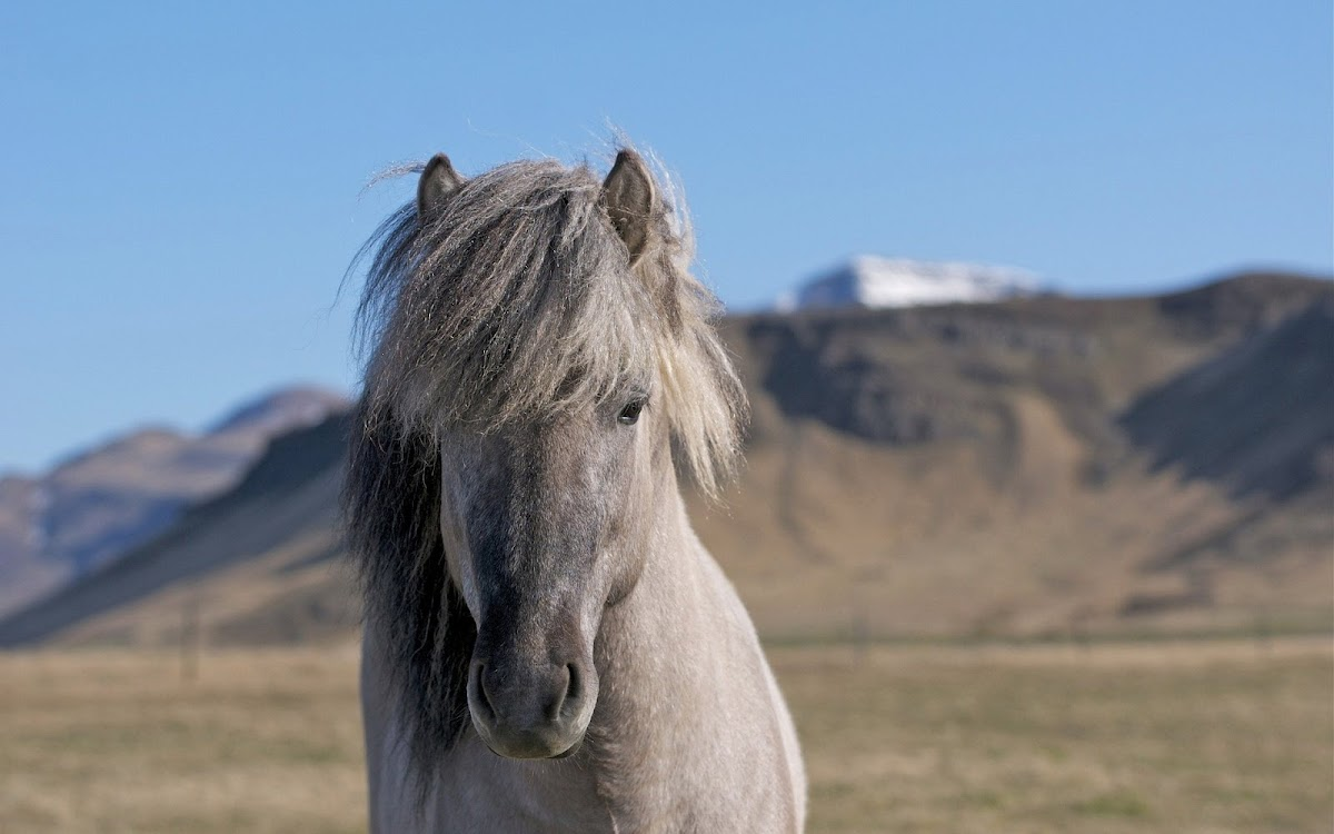 Beautiful Hair Horse