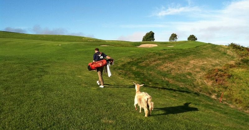 Armchair Golf Blog Tiger The Goat Impresses At Top Ranked