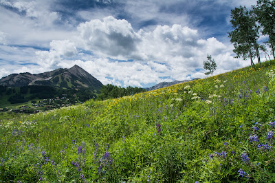 Mt. Crested Butte, Wildflowers