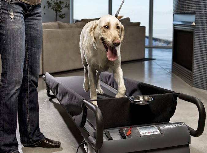 Treadmill For Your Dog Spicytec