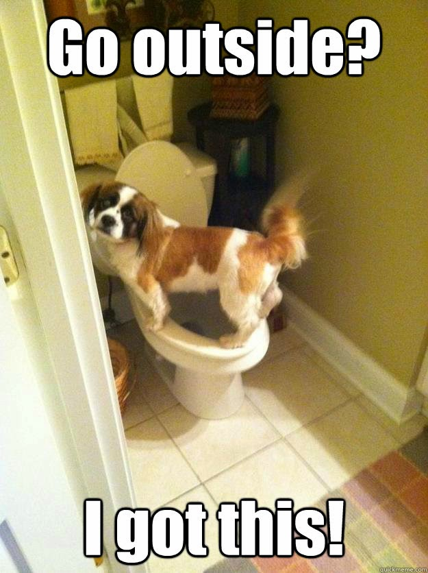How to Potty Train Your Dog - Is Your Dog Potty Trained Enough?