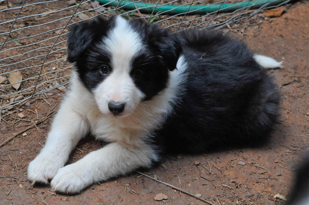 The Modern Bark Dog Training Tips 10 Puppy Teething
