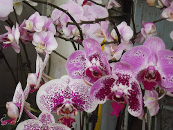 Purple orchids.