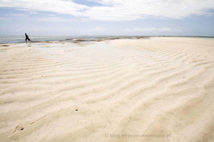 zdjęcie Zanzibar wybrzeże
