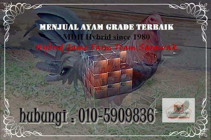 Hybrid Game Farm Team Sarawak