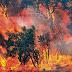 Kebakaran Hutan Indonesia Memang Karena Alam