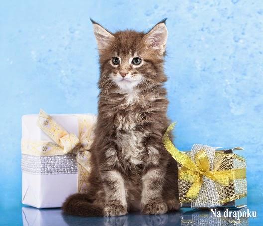 Gwiazdkowe prezenty dla kotów