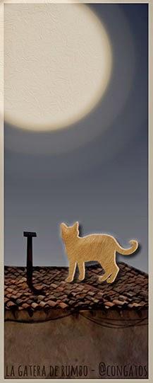Gato sobre tejado de noche_Gatera de Rumbo