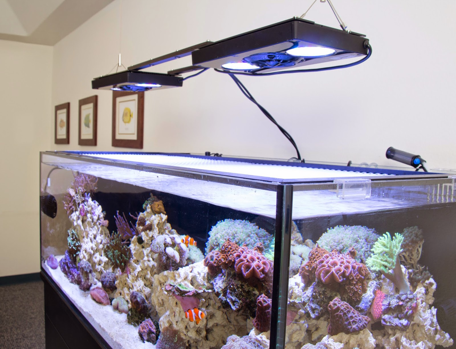 How To Hang An Aquarium Light With A Suspension Kit Marine Depot