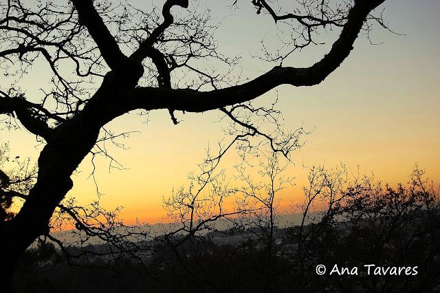 Outono/Fall By Ana Tavares
