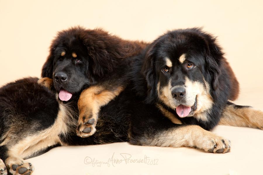 lemmikloomaga-pildistamas-koer