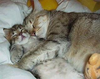 gatinhos engraçados