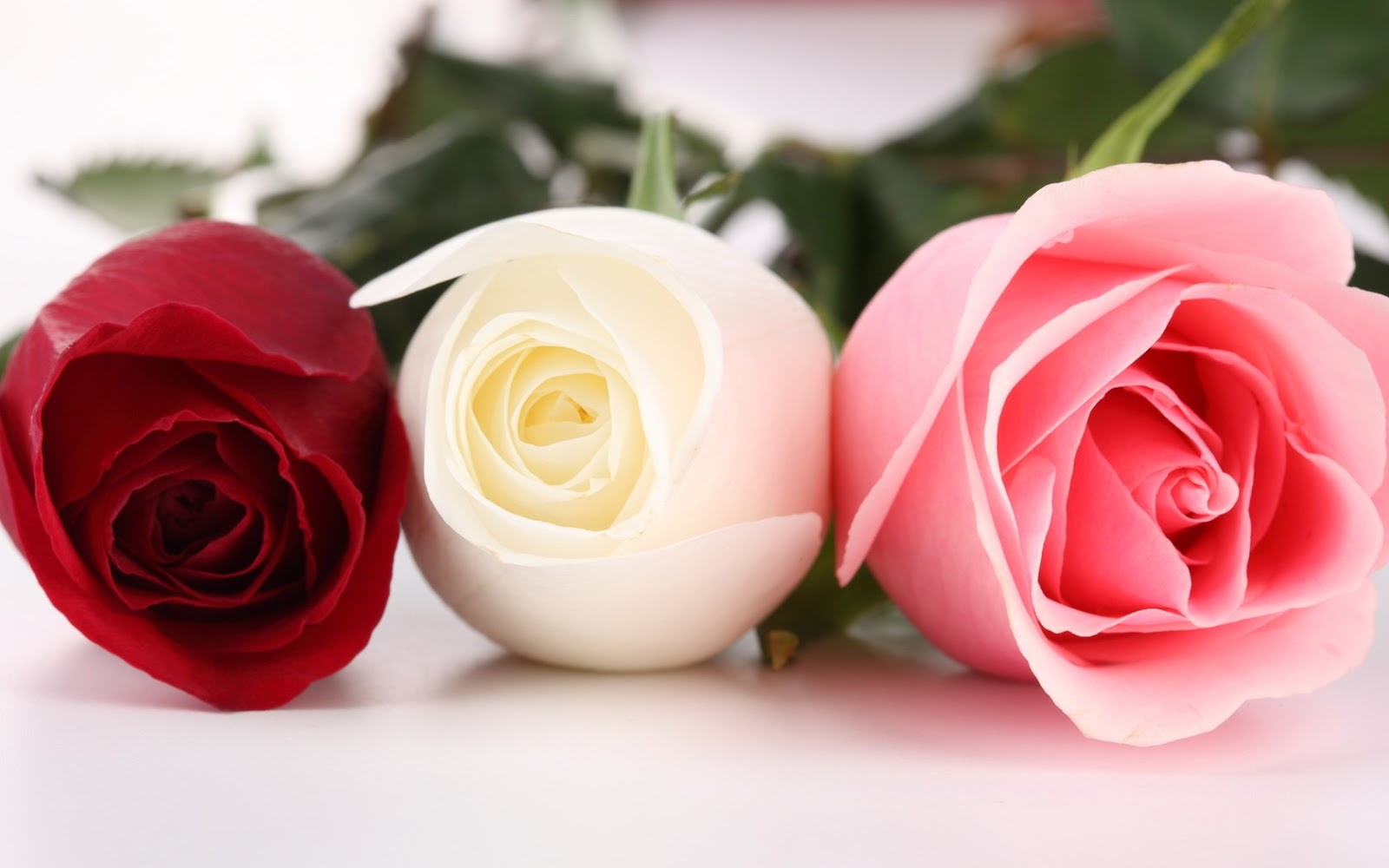 Pink Roses HD Photo