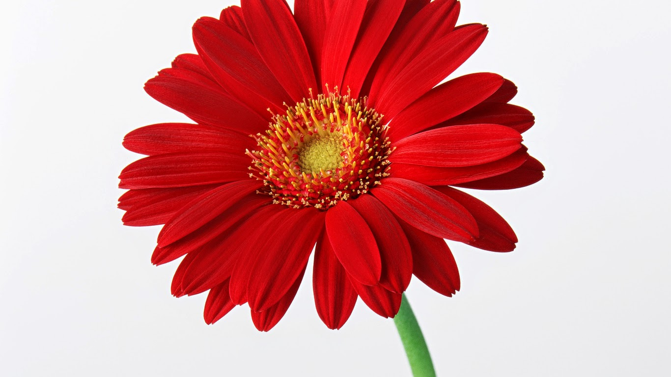 Red Flowers in Your Life - Flower With Styles