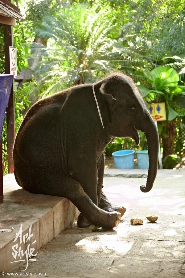 funny animal pictures, sitting elephant
