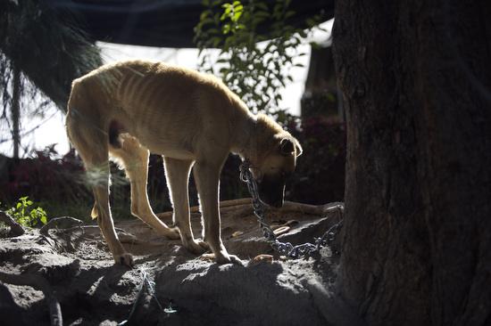 Entrada sobre el maltrato de animales domésticos. Ciudad de México