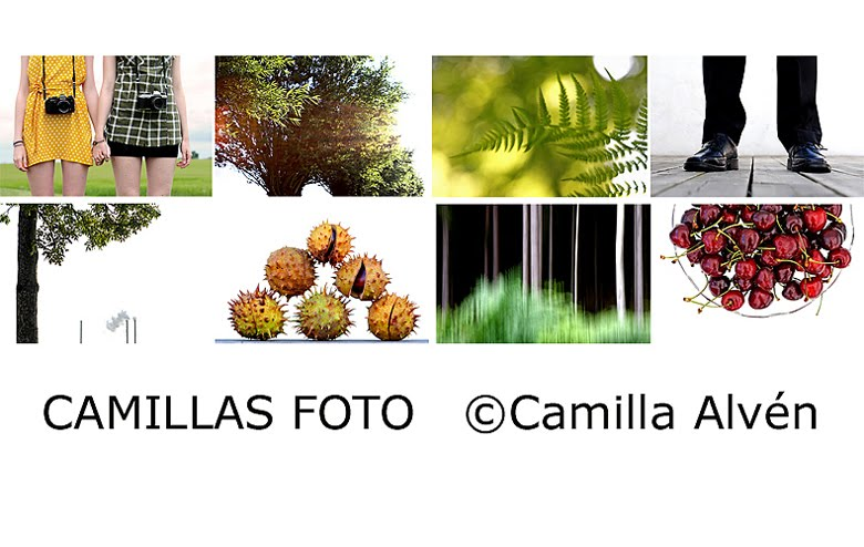 Camillas Foto