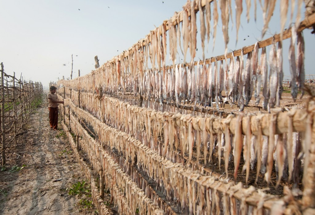 http://mashable.com/2015/03/02/fish-drying-west-bengal/