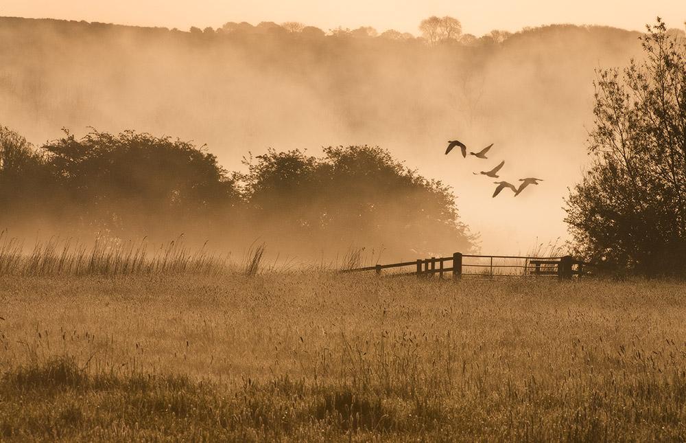 Incoming at dawn