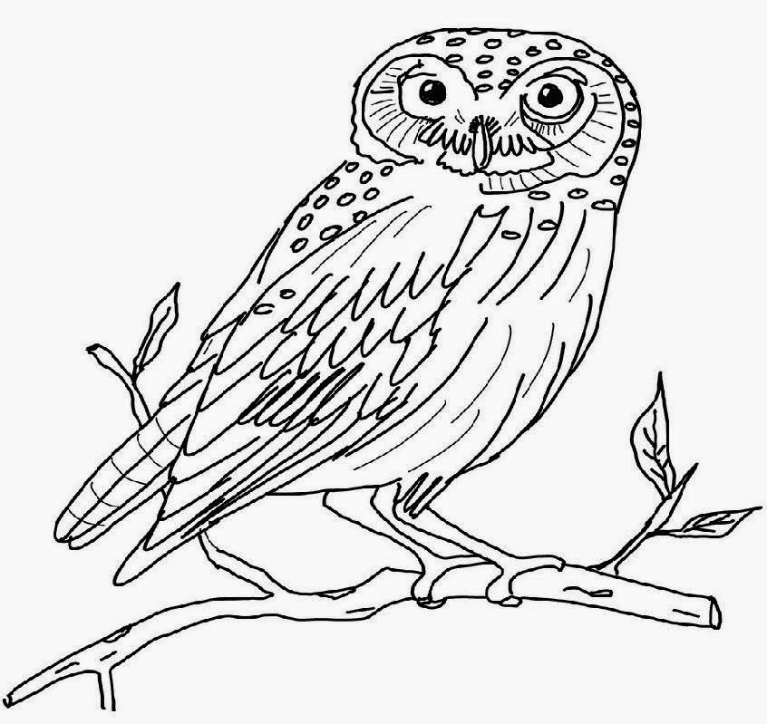 Owl Pictures To Color Free Coloring Pictures Snow Owl Coloring