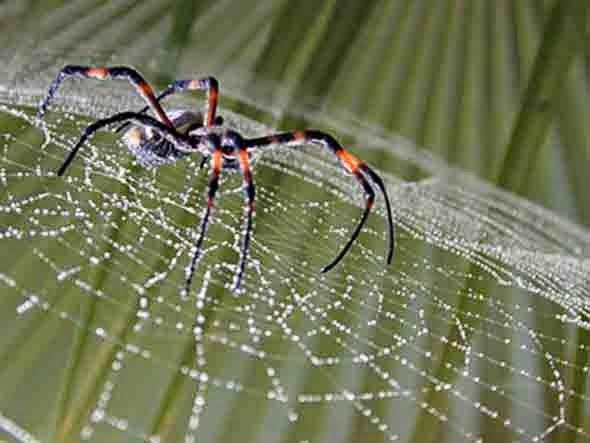 animal-araña