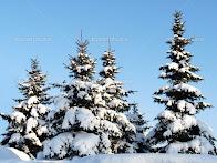 Пришла красавица Зима