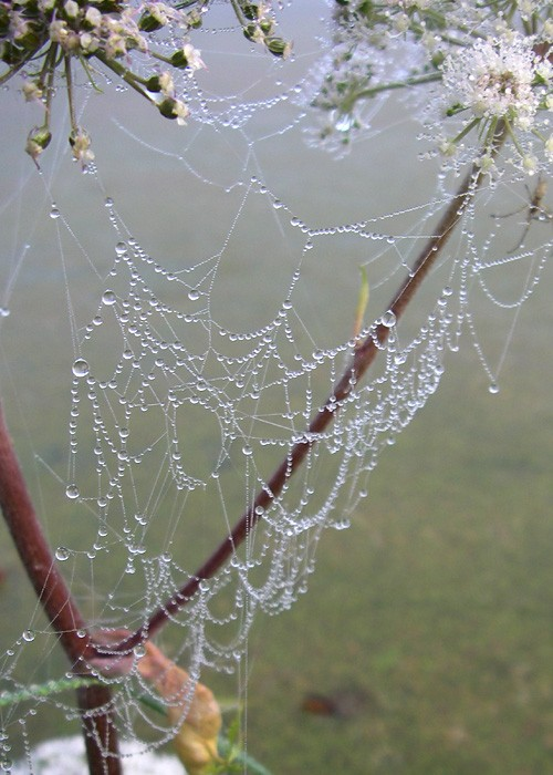 spider web jewels after rainfall