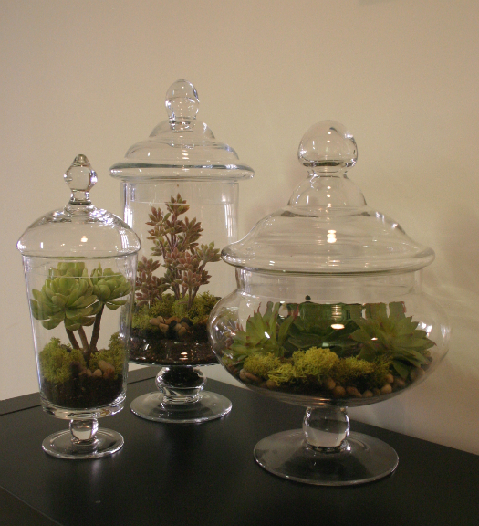 Remarkable Faux Succulents Apothecary Jars 525 x 576 · 403 kB · jpeg