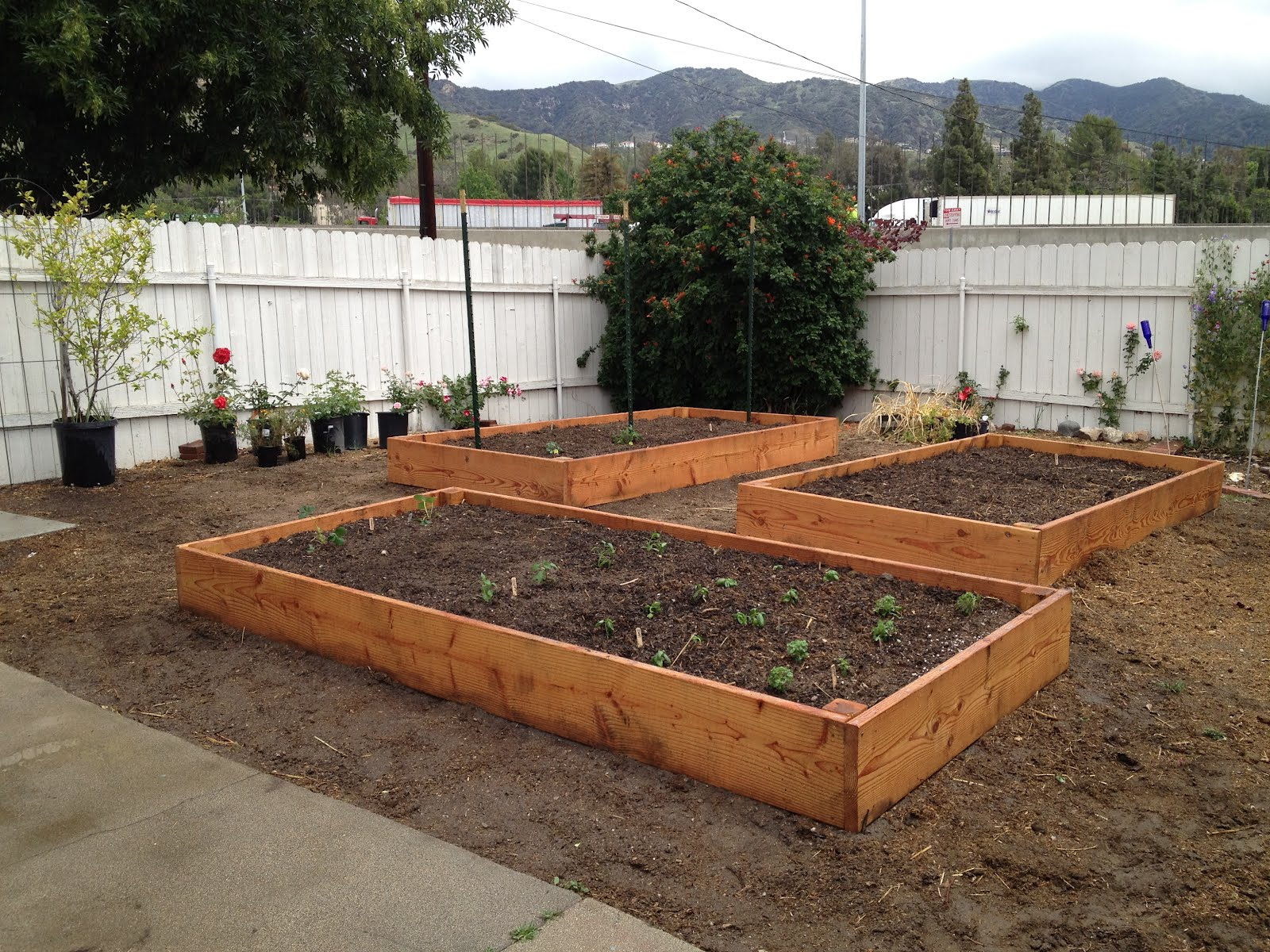 Backyard Vegetable Farming :  and rick built me 3 raised beds for a backyard vegetable garden they