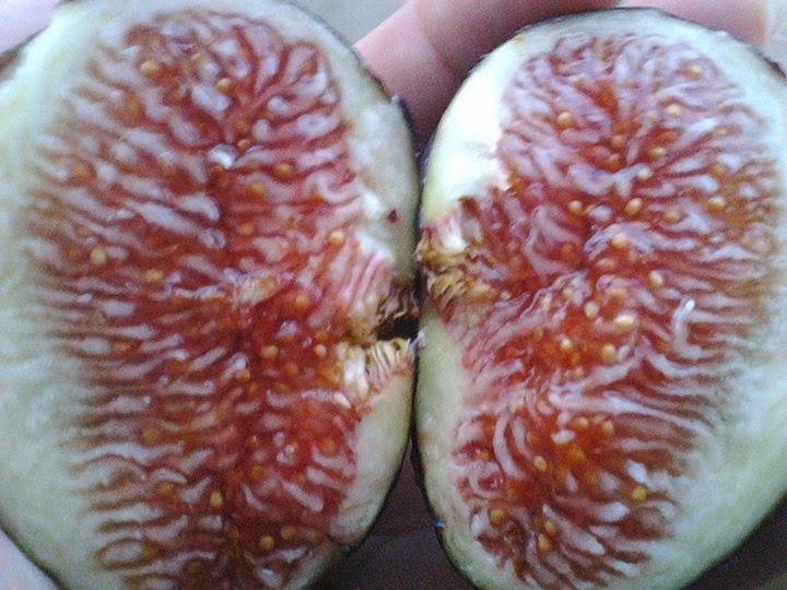 figs health benefits for men