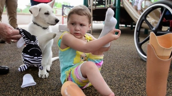 Child with prosthetic leg gets pup missing a paw